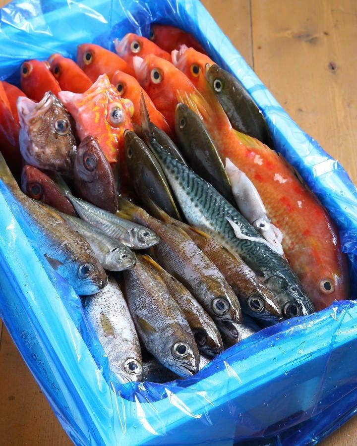鮮度を楽しむオリジナル魚料理
