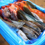 高知県・宿毛から届くお魚を使用しています
