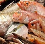 新潟の漁港直送の鮮魚