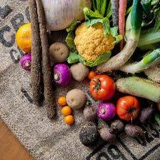 真心込めて作られたみずみずしい野菜
