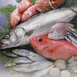 さまざまな鮮魚で刺身・創作料理を提供致しております。