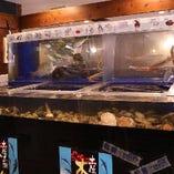 美味しいお魚をお客様に届けたい!店内の活魚の大水槽は圧巻