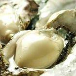 厚岸直送の【ゴリラ牡蠣】【厚岸】