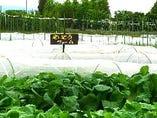 自社農園「せいとうファーム」の無農薬有機野菜【千葉県野田市】