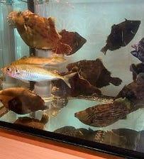 店内の水槽から新鮮な鮮魚をご提供♪