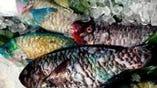 新鮮な沖縄近海産、海の幸を毎日仕入れております。