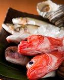 日比野市場直送 天然魚