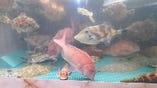 淡路島は鳴門海峡近海で獲れた旬鮮な魚介を活きでご提供!