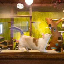 猫を見ながらお食事ができるお席
