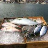 富山県氷見直送の鮮魚【富山県氷見市】