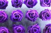 色彩豊かな薔薇