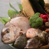 産地直送 新鮮魚貝【和歌山県】
