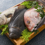 《漁港直送魚介》 福井県小浜漁港より鮮度抜群な魚介が届きます