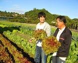 契約農家や自家菜園で育てられた野菜を使用