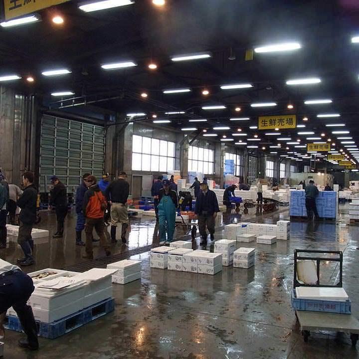 漁港から直接買い付ける鮮魚達