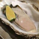 仙鳳趾牡蠣