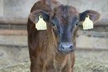 とちぎ和牛生産指定農家NO1♪ 希少部位を使ったお料理もご用意