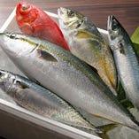 博多長浜市場から空輸で直送!朝獲れ新鮮魚介を是非ご賞味あれ!