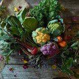 神戸・兵庫の季節のお野菜をお楽しみ下さい