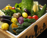 契約農家直送の朝採れ野菜