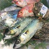 糸島や玄海灘を中心に厳選して仕入れる新鮮食材【福岡県糸島市】