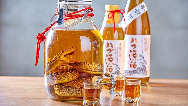 インパクト大!沖縄名物「ハブ酒」