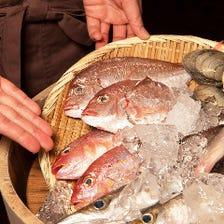 【姿売り】床波漁港直送の地魚