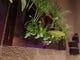 植物がたくさん