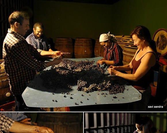 スペインから希少な素晴らしい ワインが入荷しております