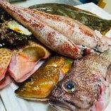 朝どれの新鮮なお魚!【新潟県 佐渡】