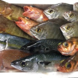 季節よりとりどりの美味しいお魚はいかがでしょうか?