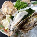 大将自慢北海道厚岸の鮮魚、牡蠣【北海道厚岸】