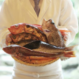 毎日新鮮な魚介類を仕入れ提供しております。