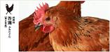 栃木県産 香り鶏【栃木県】