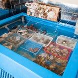 相模湾直送の鮮魚・魚介類を店舗でさばきます!