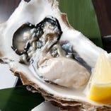 【数量限定】プリプリ!大きな牡蠣【北海道内、季節により一番良い地域より直送】