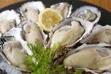 全国から最良の牡蠣だけを常時4~6種類入荷!