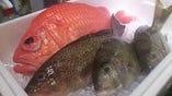 高知県宿毛産の鮮魚【高知県宿毛漁港】