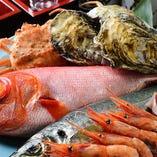 柳橋や一色の市場からも仕入れる季節の魚介をお寿司やお刺身で