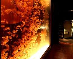 完全個室×肉居酒屋 ゆらり 北千住店イメージ