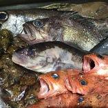 毎朝スタッフ自ら市場に買い付ける鮮魚