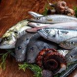 毎朝市場に買い出しに行っているお魚【豊洲(日本各地の物を使用)】