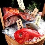 豊洲市場直送新鮮魚介【東京都豊洲】