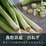鳥取県の白ねぎ【鳥取県】