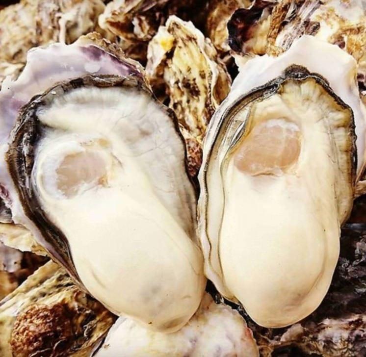 日本各地から最高の牡蠣を仕入れ!