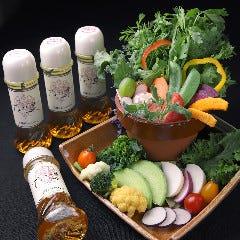 近江野菜の鉢植え畑サラダ アイスプラントと愛彩菜とミニセロリ