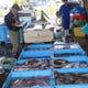 毎日港から買い付け直送される新鮮なお魚