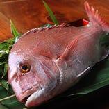 鯛は瀬戸内淡路から豊後まで。上品な脂乗りと食感を様々に。