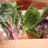 四季折々の有機野菜へのこだわり〈安心な身体に優しい有機野菜・無農薬野菜〉