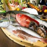 三浦半島の各漁港から毎朝水揚げされたばかりの魚を自分たちで入札